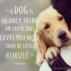Here is Dog Quotes for you. Dog Quotes top 100 greatest dog quotes and sayings with images. Dog Quotes dog quotes we rounded up the best of Love My Dog, Puppy Love, Lucky Puppy, Cute Puppies, Cute Dogs, Dogs And Puppies, Baby Dogs, Chihuahua Dogs, Mans Best Friend