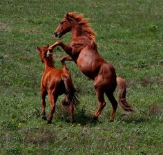 Pictures of the mustang horse