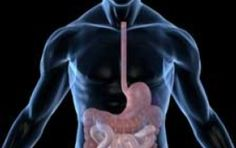 The emerging and surprising view of how the enteric nervous system in our bellies goes far beyond just processing the food we eat