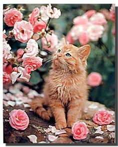 These cute kittens will bring you joy. Cats are wonderful friends. Pretty Cats, Beautiful Cats, Animals Beautiful, Pretty Kitty, Cute Kittens, Ragdoll Kittens, Bengal Cats, Baby Animals, Cutest Animals