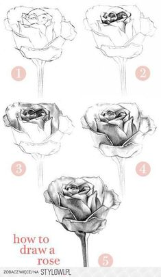 art desenho How to Draw a Rose: Learn to Draw Rose Pencil Drawings Pencil Drawing Tutorials, Art Tutorials, Roses Drawing Tutorial, Pencil Drawings For Beginners, Plant Drawing, Painting & Drawing, Value Drawing, Drawing Sketches, Art Drawings