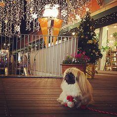 shibuya_t's photo on Instagram