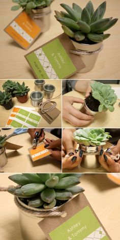 Succulent wedding favor. soooo cute! I love this idea, but the peeps from CA won't be able to bring them back. So, going with the seed papers or bombs instead. Those will be much easier to pack and smuggle home.