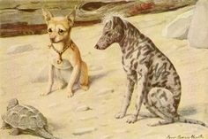 Fuertes, Louis Agassiz (1874-1927) - Book of Dogs 1919 (Chihuahua & Mexican Hairless) 9-45. #vintage, #animals, #dog