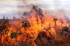 ΓΝΩΜΗ ΚΙΛΚΙΣ ΠΑΙΟΝΙΑΣ: Ενημέρωση για μέτρα πρόληψης πυρκαγιών