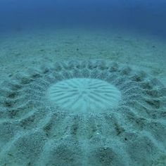 Mysterious Underwater Crop Circle