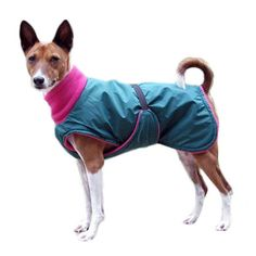 1000+ ideas about Mini Jack Russell on Pinterest | Russell