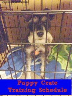 This Puppy Crate Training Schedule is perfect for your new addition!