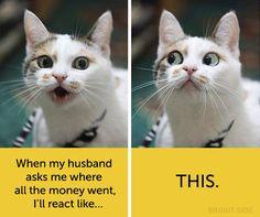15hilarious cats with human facial expressions