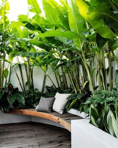 33 Fabulous Tropical Garden Design Ideas That You Definitely Like - Tropical garden design has become one of the most popular forms of garden design in recent years. Not only is it different, it also makes your garden . Tropical Patio, Tropical Garden Design, Backyard Garden Design, Tropical Landscaping, Backyard Patio, Corner Landscaping, Bali Garden, Balinese Garden, Tropical Gardens
