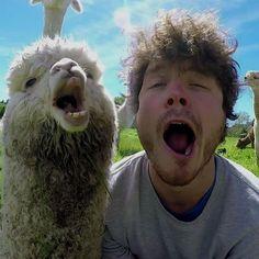 Animal whisperer: Allan Dixon is the master of animal selfies