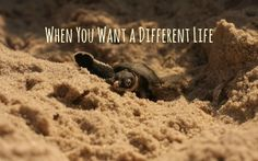 what to do when you want a different life