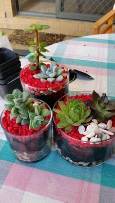 Dont know what to do with your used Candle Jars ... try this ... Succulent Terrarium's !!!! Eco Friendly great recycling idea!!!!! Also leave a little space and sit a tealight in there