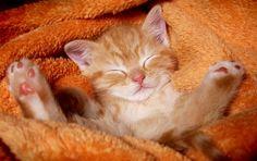 Orange kitten