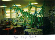 Mrs. McGibbon's fourth grade at Grant Elementary in Eureka, CA transforms their classroom into a kelp forest! And other activities