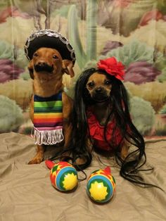 30 amazing pet halloween costume ideas dresses online, funny dogs, stuff to Dachshund Funny, Funny Dogs, Cute Dogs, Funny Animals, Cute Animals, Animals Dog, Harry Potter Halloween Costumes, Diy Dog Costumes, Animal Costumes