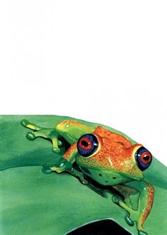Reallife Kermit The Frog Discovered In Costa Rica Pets And - Real life kermit the frog discovered in costa rica