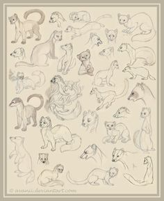 Massive sketchdump of mustelids! Ferrets, weasels, martens and badgers! Also on my Deviantart: http://avanii.deviantart.com/art/Sketchdump-Mustelids-302861312