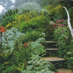 Succulent plantings