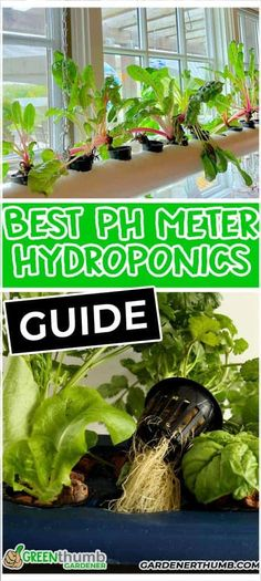 We examine and review the best hydroponic pH meters.  Finding the best ones is important if you want to ensure you test your system. Hydroponic Solution, Hydroponics System, Hydroponic Gardening, Container Gardening, Beginners Gardening, Vegetable Garden For Beginners, Gardening Tips, Growing Vegetables, Growing Plants