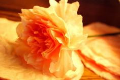 Homemade Serenity: Why Don't You Make Coffee Filter Flowers