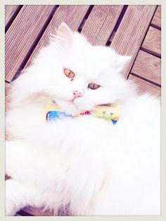tutorial tie for a pet  turorial pajarita para mascota  www.knitandlove.blogspot.com