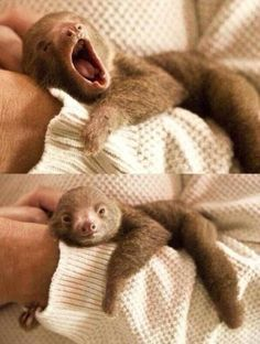 7. cuddle with a baby sloth is now on my bucket list............that sounds so weird