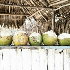 Coconut Bowl, Beach Meals, Island Food, Tropical Vibes, Beach Cottages, Summer Of Love, Eco Friendly, Fruit, Coconuts