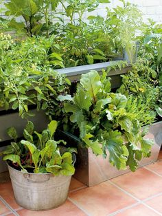 Awesome 20+ Fresh Ideas for Growing Vegetable in Containers https://gardenmagz.com/20-fresh-ideas-for-growing-vegetable-in-containers/
