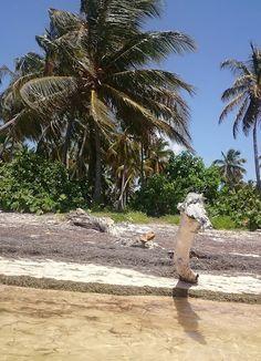 fascynujące podróże: Dominikana - praktyczny poradnik