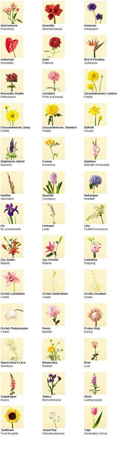 types of flowers pictures and names | Types of Flowers                                                                                                                                                                                 More