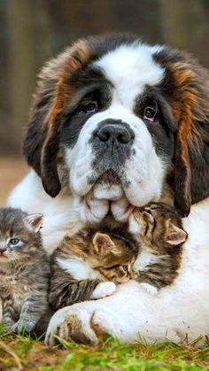 Animales graciosos, bonitos, tiernos.En todas sus variedades y razas, con comportamientos y gestos que nos resultaran familiares.