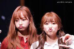 Japanese Girl Group, The Wiz, Yuri, Girlfriends, Twitter, Swan, Jade, Ships, Kpop