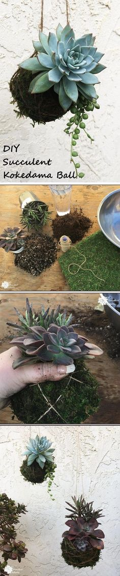 Succulent kokedama balls! A step-by-step guide to DIY Succulent kokedama #Kokedamas