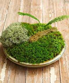 Container Gardening Ideas Add a little flavor to your table with this easy-to-do moss garden! - Make your own tabletop moss garden with these 5 simple steps! We even got good tips and tricks from moss expert, David Spain. Succulents Garden, Garden Plants, Indoor Plants, Succulent Planters, Air Plants, Hanging Planters, Cactus Plants, Indoor Herbs, Garden Beds