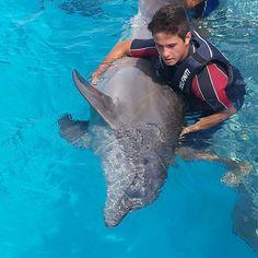Sea Dolphin, Abs Boys, Cimorelli, Disney, Dolphins, Celebrities, Cute, Boy Boy, Youtubers