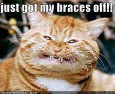 Thank you so much funny. Thank you so much funny images. Thank you so much funny meme. Thank you so much funny. Thank you so much funny gif. Thank you so much funny image. Thank you so much funny gif. Cute Cats, Funny Cats, Funny Animals, Cute Animals, Crazy Cat Lady, Crazy Cats, Bad Cats, Chat Web, Tierischer Humor