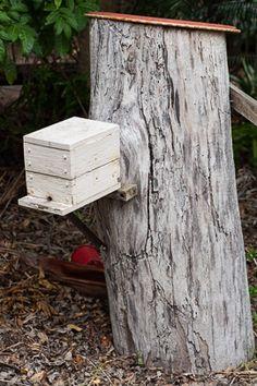 Soft split of Australian native stingless bee hive