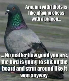 ha! Chess with a pigeon