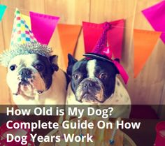 How Old is My Dog? Complete Guide On How Dog Years Work | Paw Castle