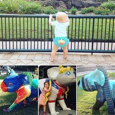 Koala heaven at Currumbin..... #lorikeetkoala #wonderwomankoala #cityscapekoala #currumbinwildlifesanctuary  by zoe_boe_mitchell http://ift.tt/1X9mXhV