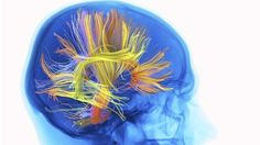 Protein clue to old-age memory loss (~ Alzheimer's)
