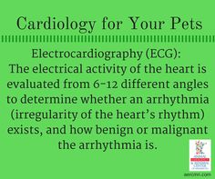 To learn more about ECG or pet cardiology, talk to your vet. If your vet does not offer advanced cardiology services, ask for a referral to AERC, an animal referral center in the Twin Cities with a board-certified veterinary cardiologist. #cardiologyforpets #petcardiology #twincitiesveterinarycardiologist