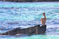 GALAPAGOS ISLANDS Photo Gallery: San Cristobal, Kicker Rock