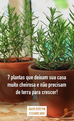 Eco Garden, Home Vegetable Garden, Home And Garden, Plantas Bonsai, Modern Planters, Interior Garden, Medicinal Herbs, Love Flowers, Gardening Tips