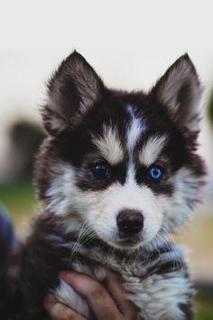 envyavenue:  Puppy