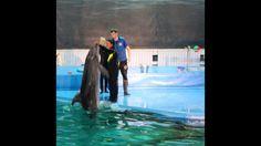 Санкт-Петербургский дельфинарий ! Лена, афалина и кит полярный !