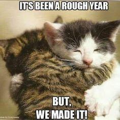 f25afba3805 Kitty hugs are the best hugs