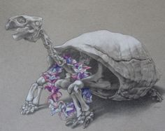"For Sale: Tortoise with Flower Necklace - 8x10 Drawing on Paper by April Best | $200 | 10""w 8""h 