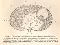 La procréation médicalement assistée mais surtout expliquée !
